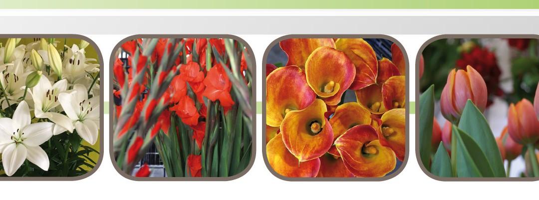 Uitnodiging Voorjaarsbloemenshow