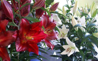 Het is weer tijd voor onze bloemenshow!